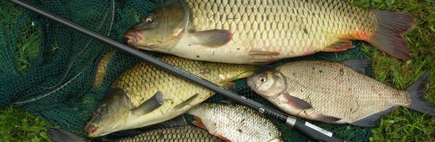 A ponty horgászata és felszerelései