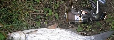 Hasznosi Balinok... | HorgászMánia friss horgász hírek
