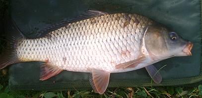 Harangi Csaba: Októberi próbálkozások | HorgászMánia friss horgász hírek