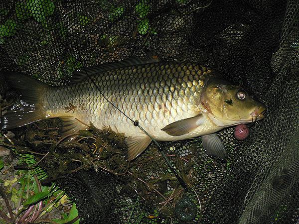 Az idei első pontyozás…   HorgászMánia friss horgász hírek