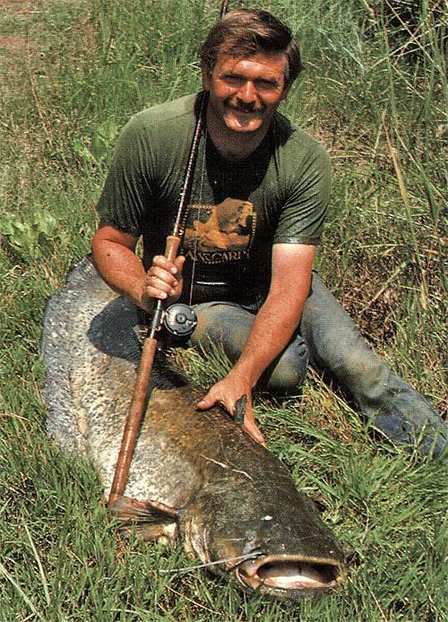 A harcsa az édesvizek óriása | HorgászMánia friss horgász hírek
