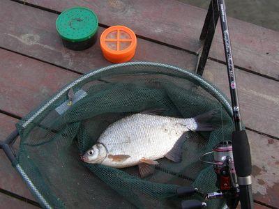 Végre feederezve a mederben | HorgászMánia friss horgász hírek