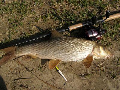 Tavaszi márnák a Dunán | HorgászMánia friss horgász hírek