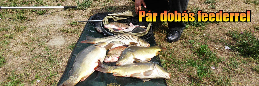 header_pardobas
