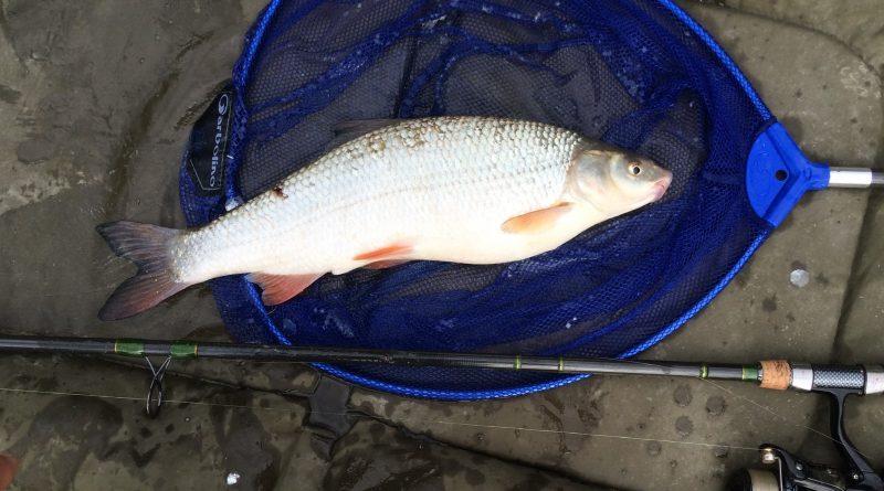 Keszegek a paducok birodalmában | HorgászMánia friss horgász hírek