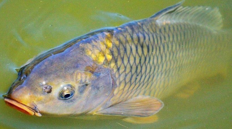 A Balatoni Horgászrend változásai 2019-től
