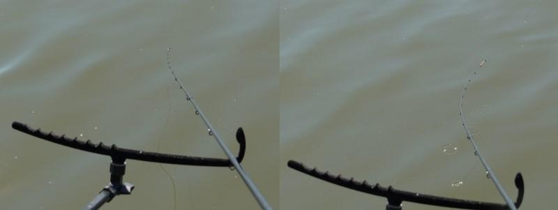 Merenye másik arca | HorgászMánia friss horgász hírek