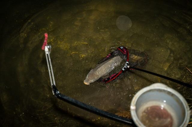 Feederrel sötétedés után   HorgászMánia friss horgász hírek