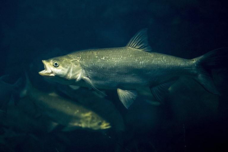 145 védett halat fogott ki, mert azt hitte, sneci | HorgászMánia friss horgász hírek