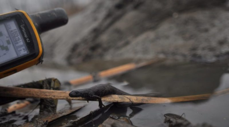 Sorra pusztulnak el az állatok Tokajban, mert telelési időszakban kezdték meg az Ively-ér kotrását | HorgászMánia friss horgász hírek