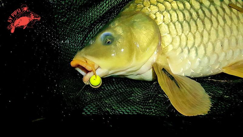 Ismeretlen vizeken | HorgászMánia friss horgász hírek
