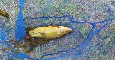 Halállomány felmérés és halmentés az Endrédi-patakon   HorgászMánia friss horgász hírek