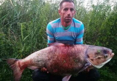 24 kilós gigabusát akasztottak a Holt-Marcalon