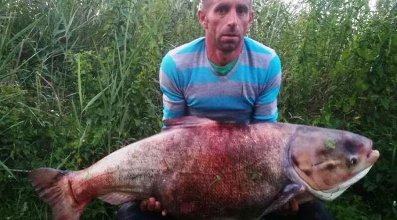 24 kilós gigabusát akasztottak a Holt-Marcalon | HorgászMánia friss horgász hírek